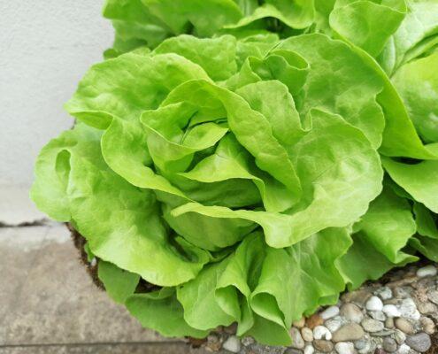 plantbased food Salat