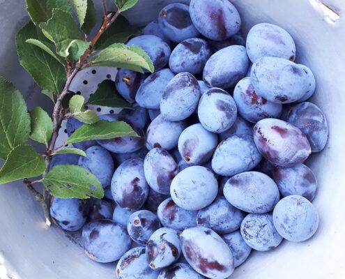 pflanzliche Vollwerternährung Obst